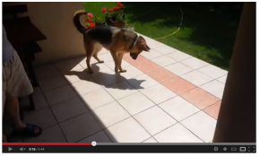 Dog Hates His Own Shadow